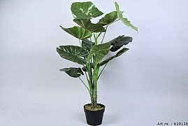 PLANT TARO IN POT GREEN D70XL100CM