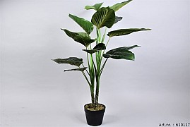 PLANT PHILONDENDRON IN POT GREEN D70XL100CM