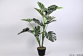 PLANT MONSTERA IN POT GREEN D70XL100CM