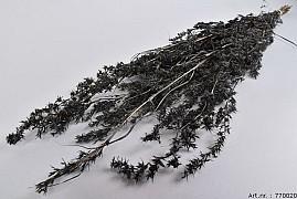DRY ALFONSO GRASS D.GRIJS 100CM P/100 GRAM