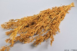 DRY ALFONSO GRASS OKER 100CM P/100 GRAM