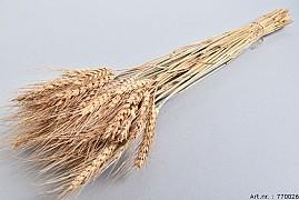 DRY WHEAT GRASS NATUREL 60CM P/100 GRAM