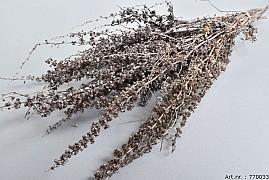 DRY PALMA GRASS WHITEWASH 50-65CM P/100 GRAM