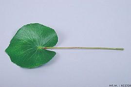 GREEN GALAX LEAF SMALL 10CM