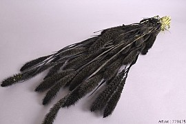 DRY SETARIA BLACK L80CM 130GRAM